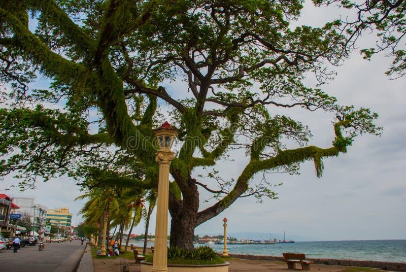 Margem com as árvores bonitas no tempo nebuloso Dumaguete, Filipinas imagens de stock