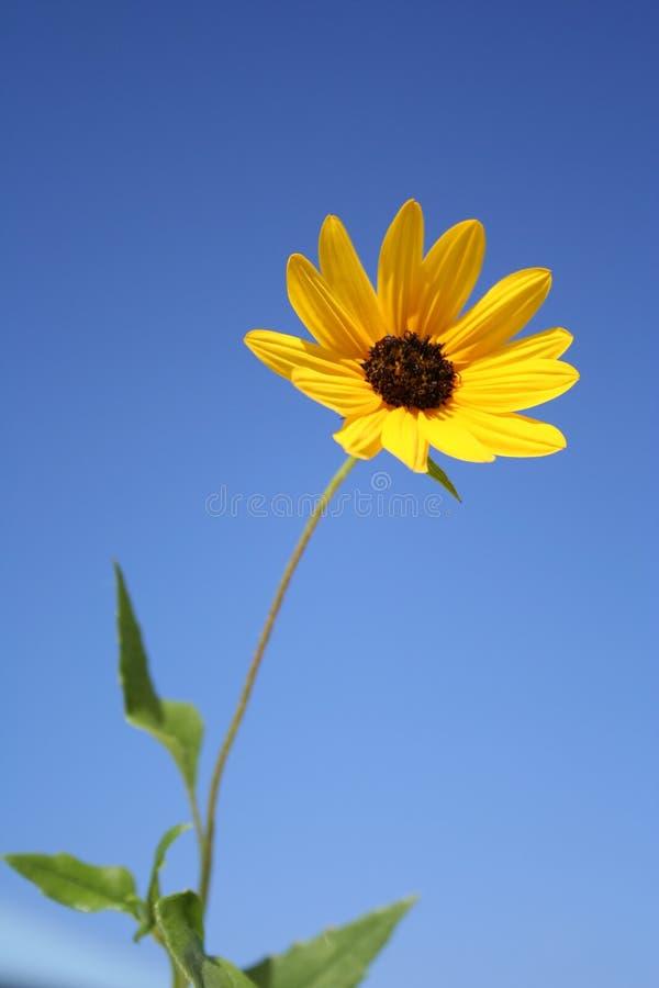 Download Margherita immagine stock. Immagine di giardino, molla - 211549