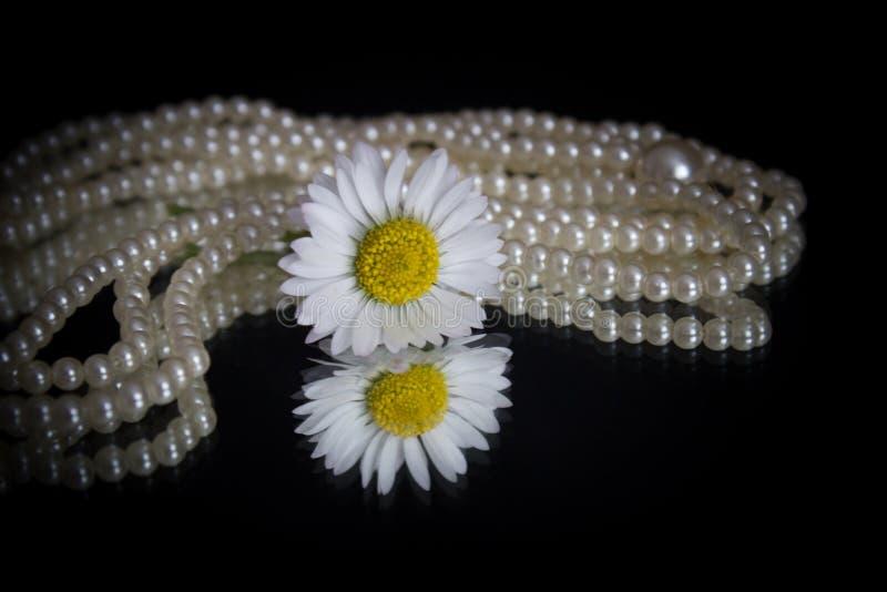 Margherita bianca e perle immagini stock