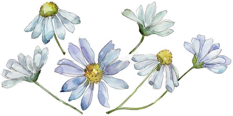 Margherita bianca Fiore botanico floreale Wildflower selvatico della foglia della molla isolato illustrazione vettoriale