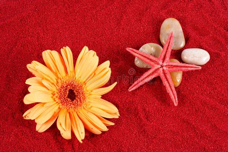 Margherita e stelle marine oltre quattro pietre sulla for Quattro stelle arredamenti prezzi