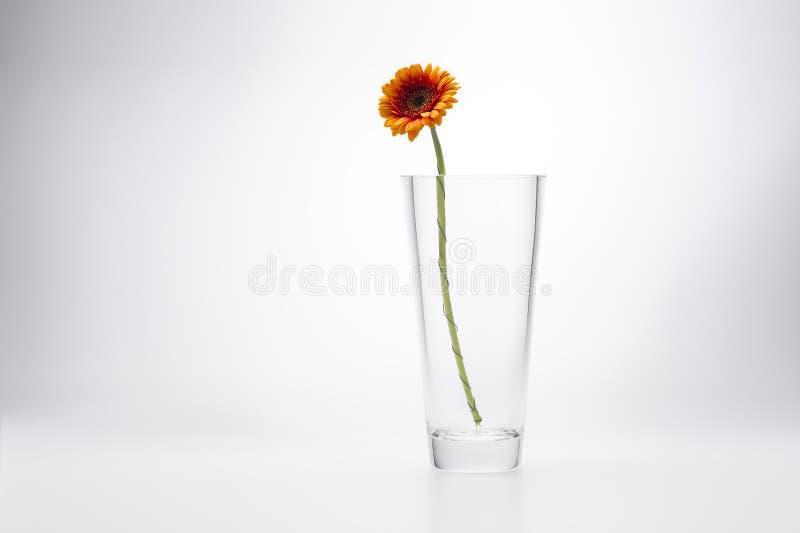 Margherita gialla della gerbera in un vaso di vetro alla moda fotografia stock