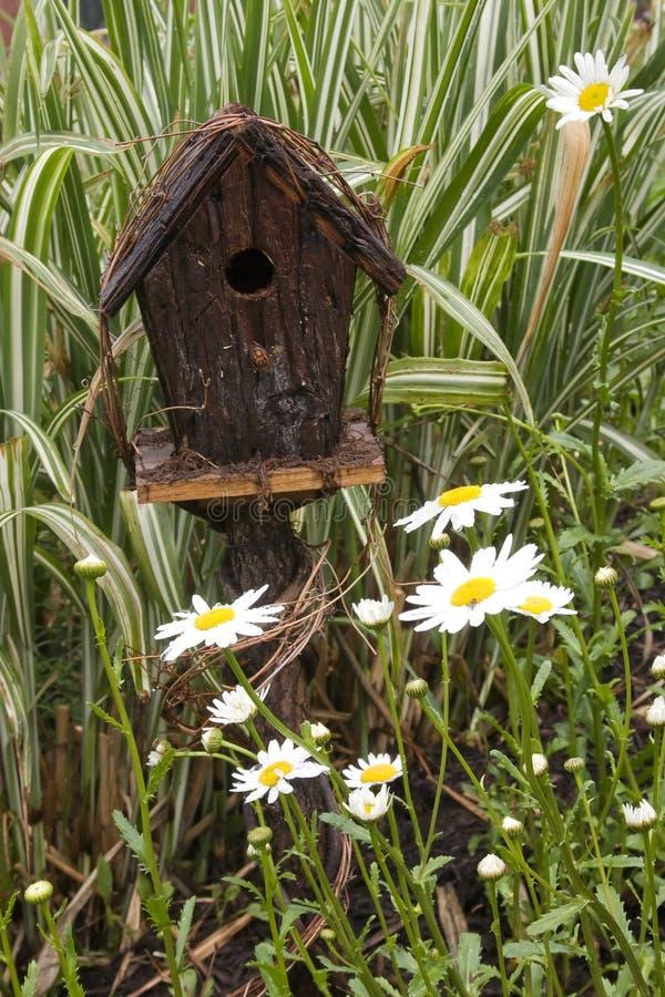 margherite del birdhouse fotografia stock