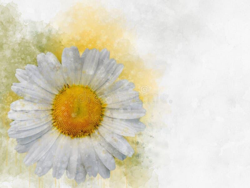 Margriet bloemen botanische bloem Waterverf achtergrondillustratiereeks Het ge?soleerde element van de madeliefjeillustratie stock illustratie