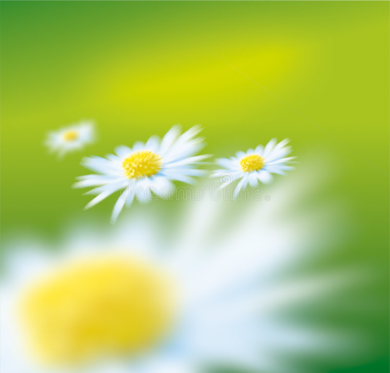 Marguerite stock images