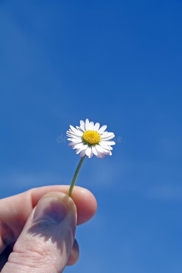 Download Marguerite image stock. Image du doigt, chaud, amitié, ressort - 733901