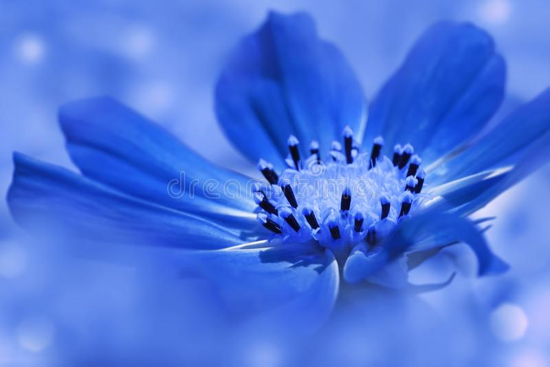 Marguerite bleue de fleur sur un fond brouillé bleu-clair closeup Orientation molle image stock