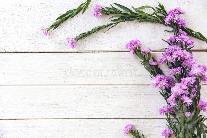 Marguerite daisy flower purple decorate white wooden background. Marguerite daisy flower purple decorate on white wooden background royalty free stock photography