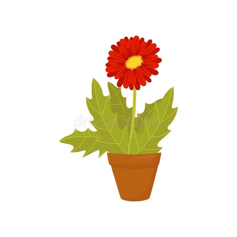 Marguerite de Gerbera avec les feuilles de floraison rouges de fleur et de vert Icône plate de vecteur de l'usine mise en pot à l illustration de vecteur