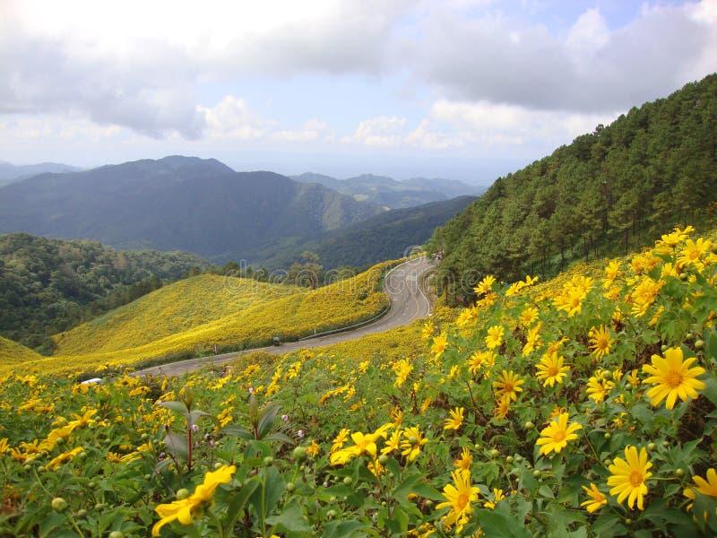 Marguerite jaune dans la colline photographie stock