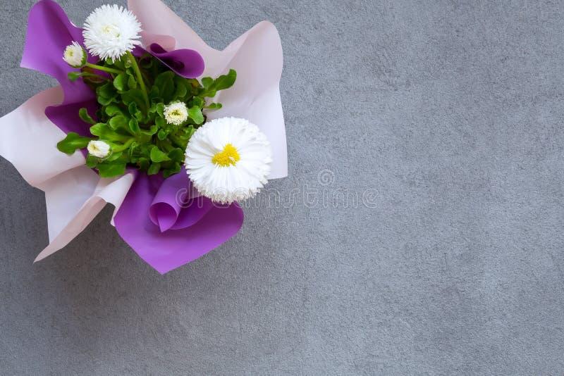 Marguerite kwiaty na popielatym kamiennym tle, kopii przestrzeń fotografia stock