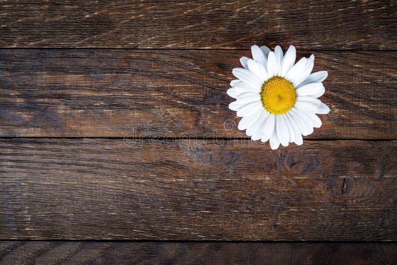 Marguerite sur un fond en bois images stock