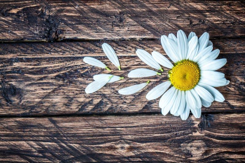 Marguerite sur un fond en bois images libres de droits