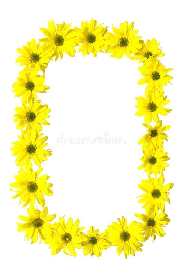 Marguerites amarelos fotos de stock