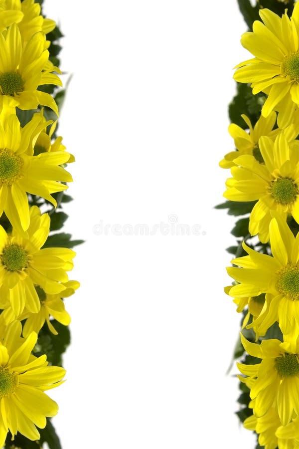 Marguerites amarelos fotos de stock royalty free
