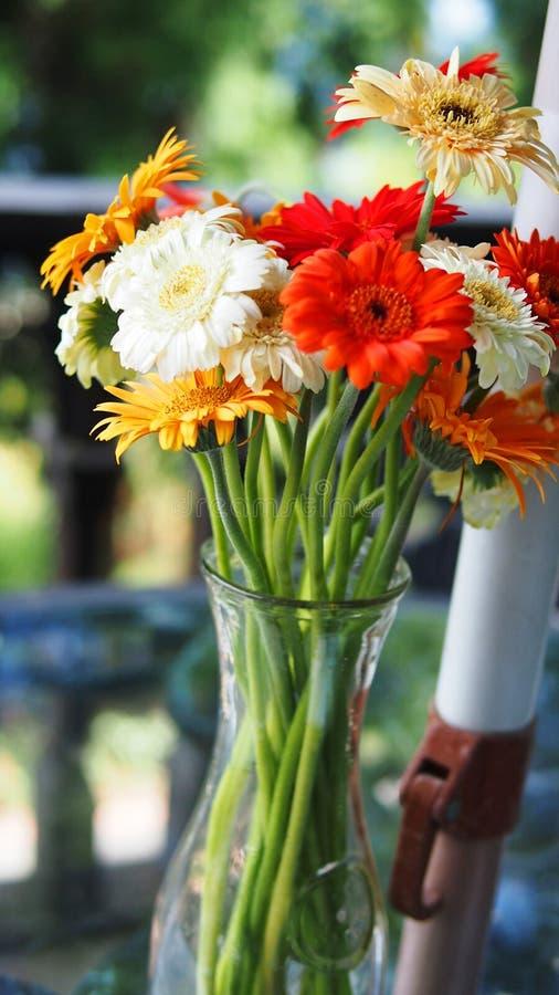 Marguerites colorées dans un vase photographie stock libre de droits