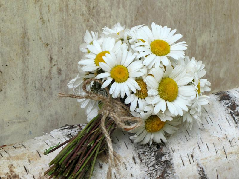Marguerites de bouquet de pays photographie stock libre de droits