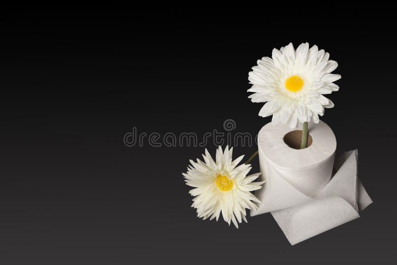 Marguerites fraîches et papier hygiénique, décentré images stock