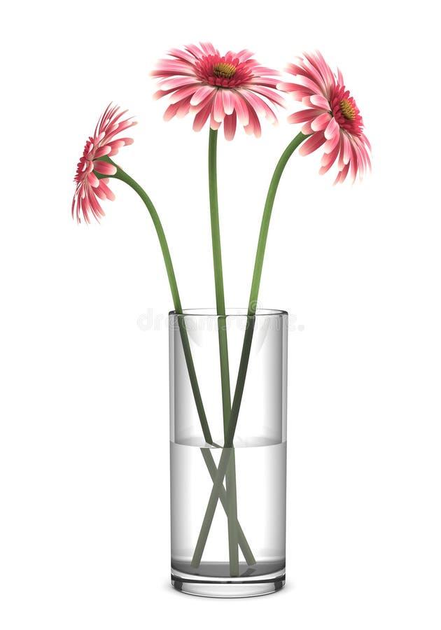 Marguerites roses de gerbera dans le vase d'isolement sur le blanc photos libres de droits