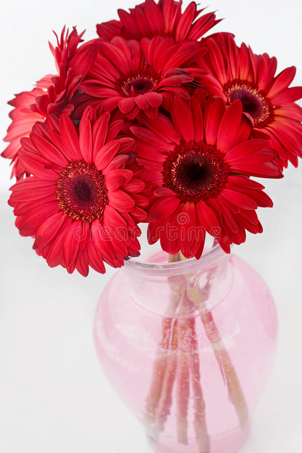 marguerites rouges photographie stock