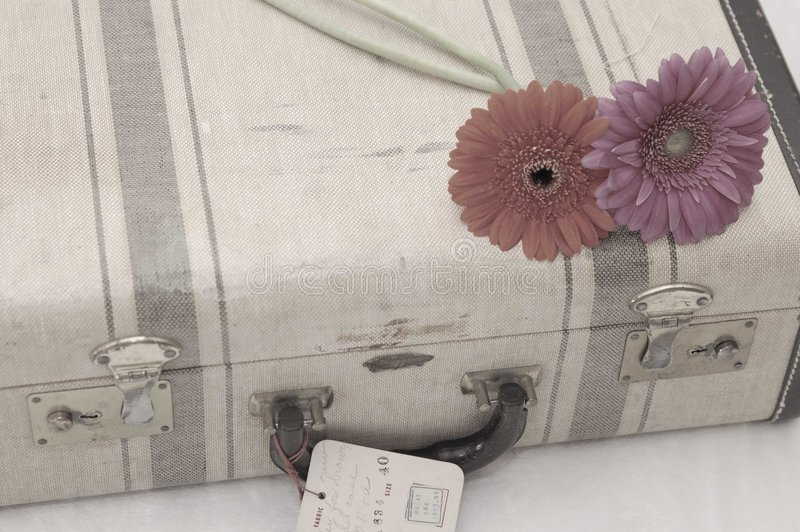 Marguerites sur le suitcasee photos stock