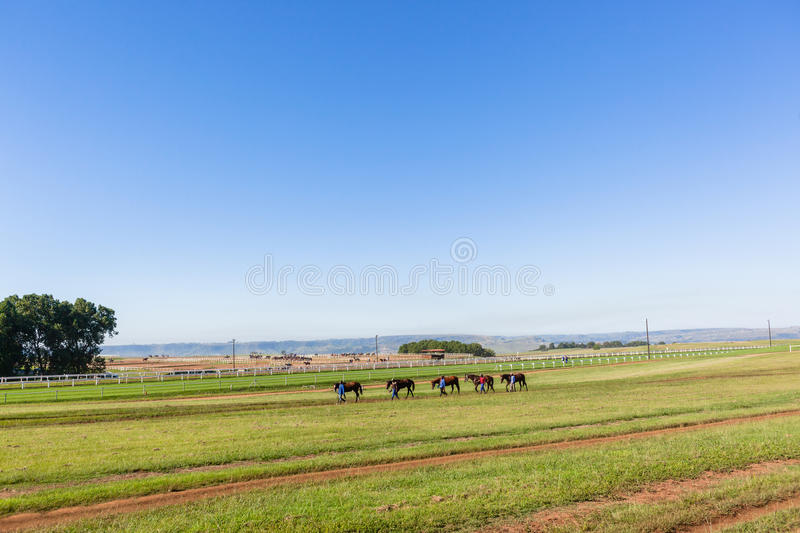 Marié Training Landscape de chevaux de course photographie stock