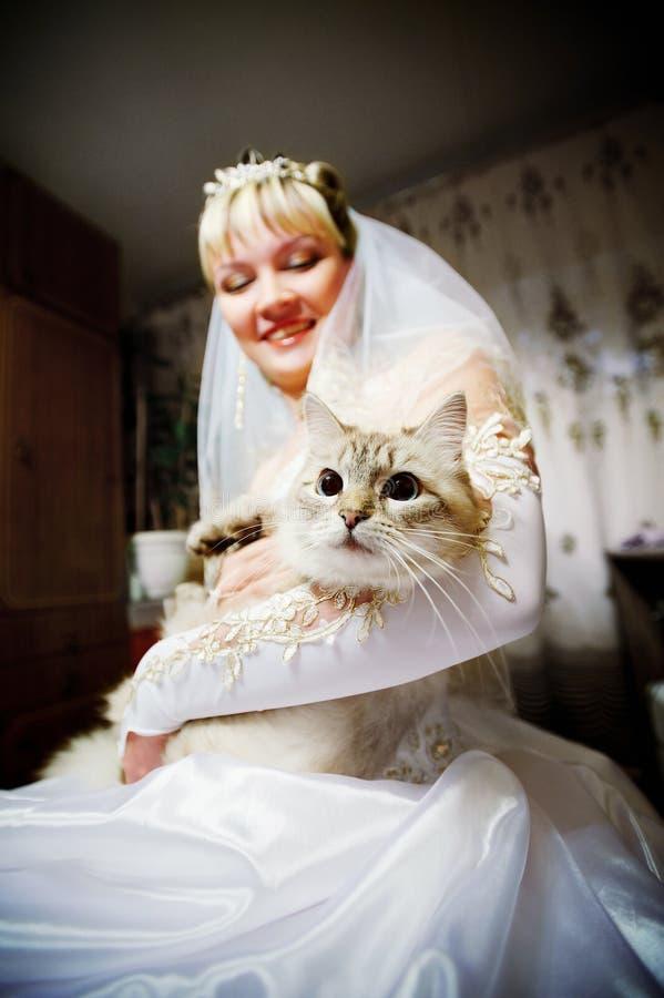Mariée du chat dans les mains photographie stock
