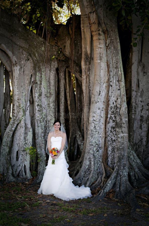 Mariée sous l'arbre photographie stock