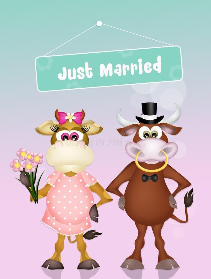 Mariage des vaches illustration stock