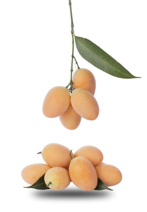 Marian Plum o Plum Mango immagine stock libera da diritti