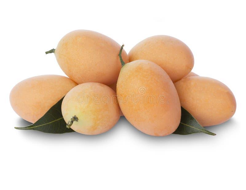 Marian Plum o Plum Mango fotografia stock