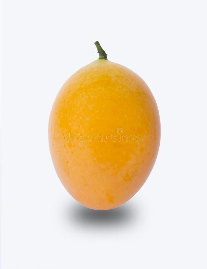 Marian Plum o Plum Mango fotografie stock libere da diritti