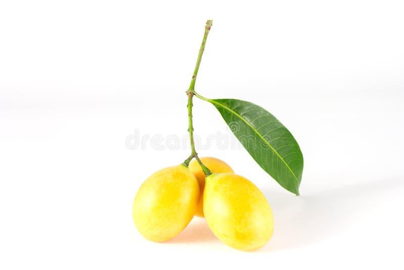 Marian Plum-, Plum Mango- oder Bouea-macrophylla Griffith lizenzfreie stockbilder