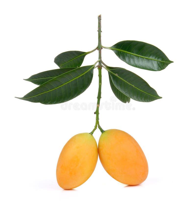 Marian plum thai fruit isolated on white backgroun. Sweet Marian plum thai fruit isolated on white backgroun stock photos