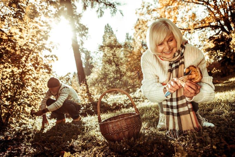 Marido e esposa que cortam cogumelos na floresta fotos de stock