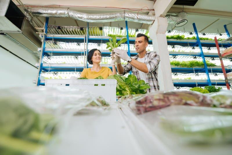 Marido e esposa que plantam verdes na estufa no fim de semana fotos de stock