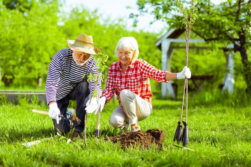 Marido que ajuda sua esposa com terra de escavação antes de plantar árvores fotos de stock royalty free