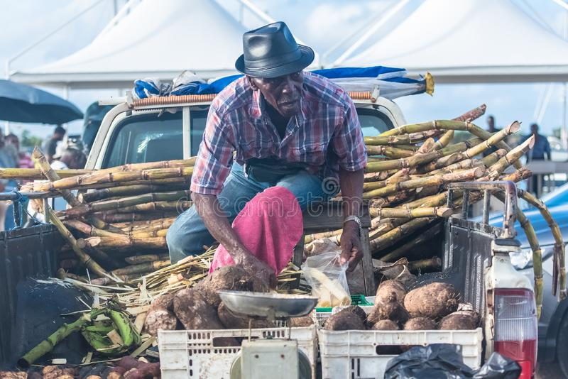 Marie-Galante island in Guadeloupe. January 13th, 2018, man who peels some sugar cane on the market stock image