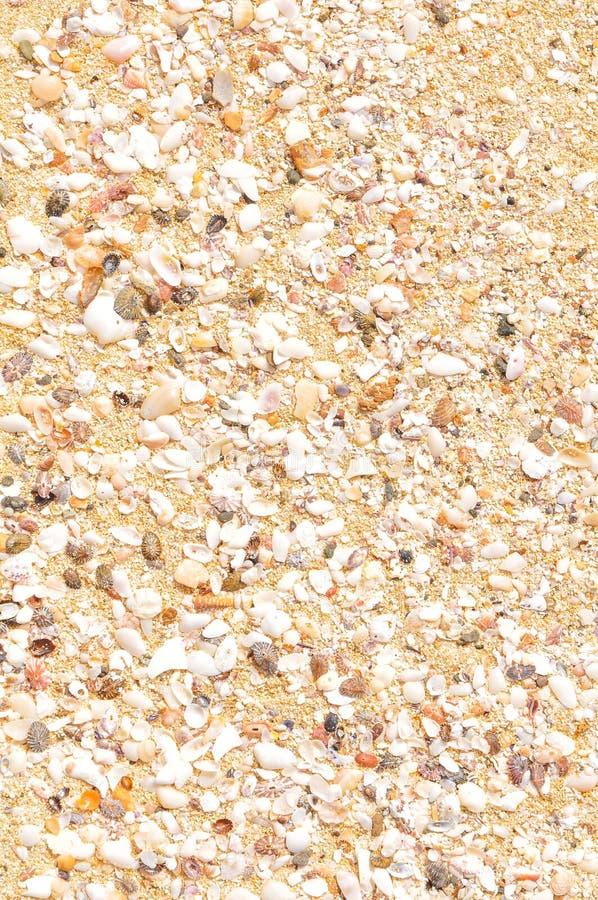 Mariene achtergrond met overzeese shells royalty-vrije stock fotografie