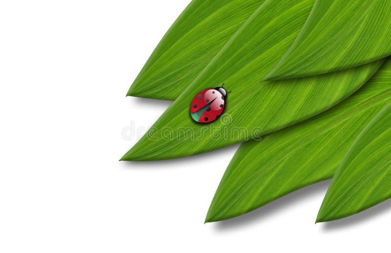 Marienkäfer auf einem Blatt stockbild