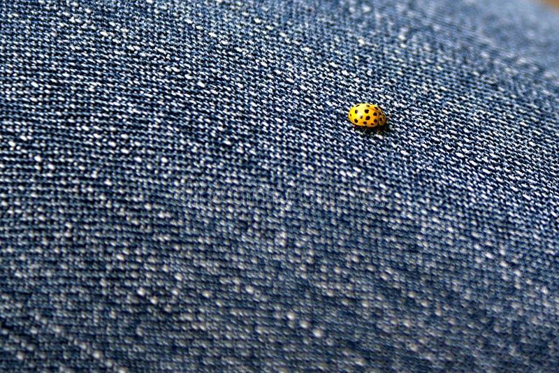 Marienkäfer auf Jeans lizenzfreies stockbild