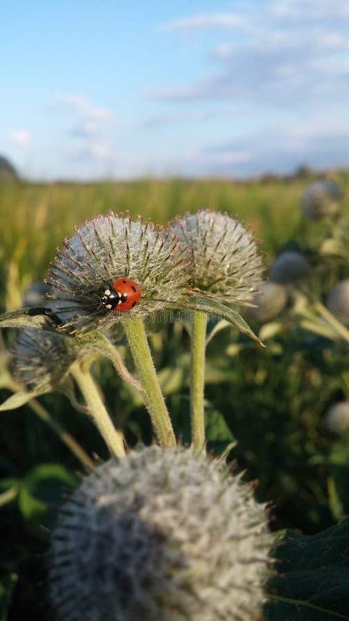 Marienkäferliveleben hoch in den schönen Umgebungen stockfoto