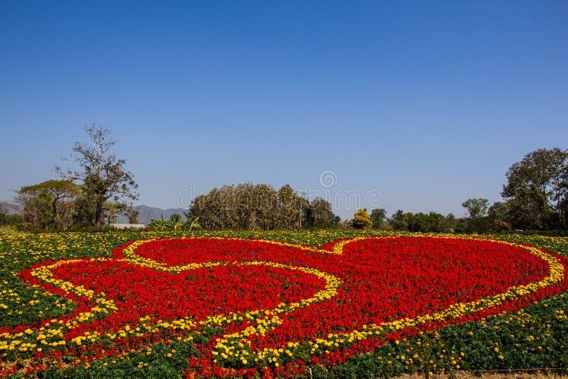 Marigold και κόκκινο λουλούδι στοκ εικόνες