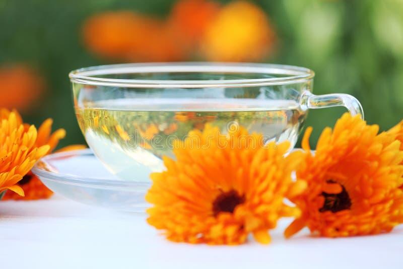Marigold τσάι στοκ φωτογραφία με δικαίωμα ελεύθερης χρήσης