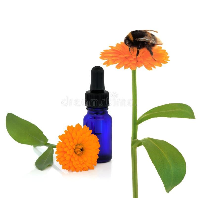 Marigold Aromatherapy stock photos