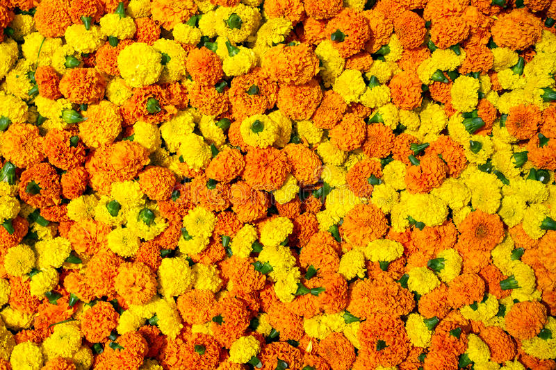 Marigold flowers garland background royalty free stock photography