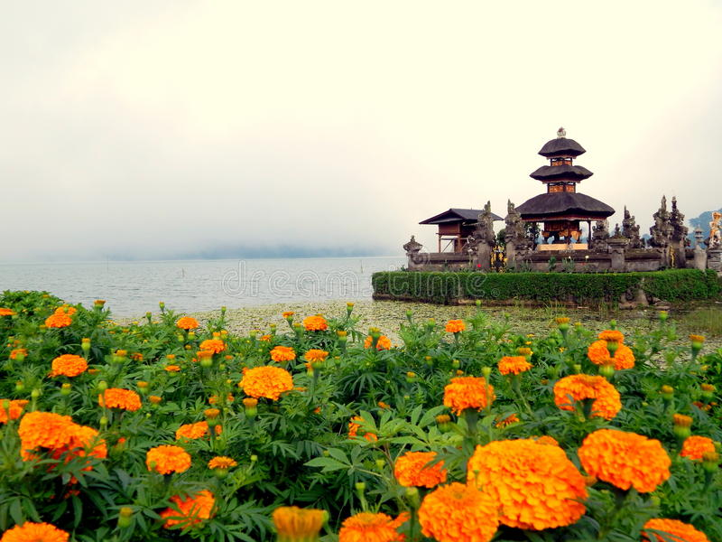 Marigold flowers and Hindu temple at Bedugul Bali. Marigold flowers at garden with the background of Ulun Danu Bratan temple in Bedugul, Bali, Indonesia. Its royalty free stock image