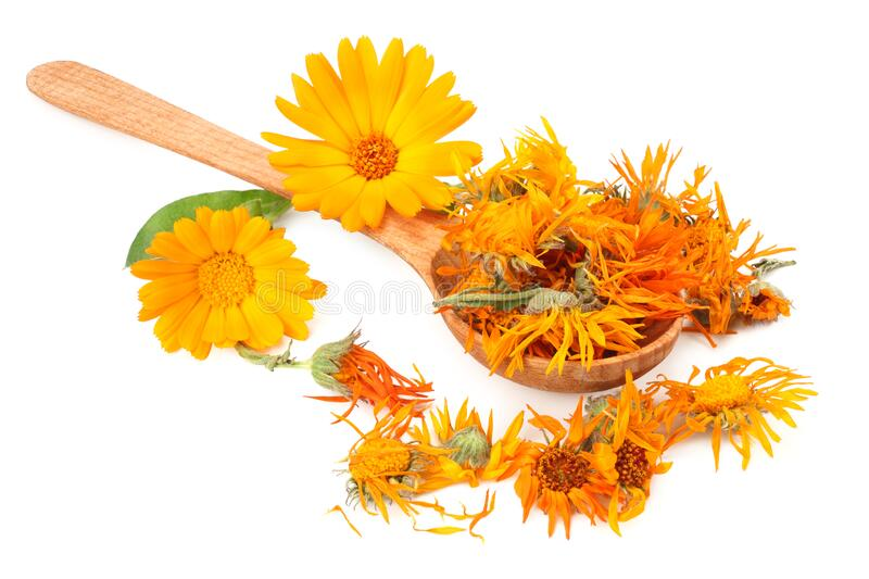 marigold flowers with petals isolated on white background. calendula flower stock photos