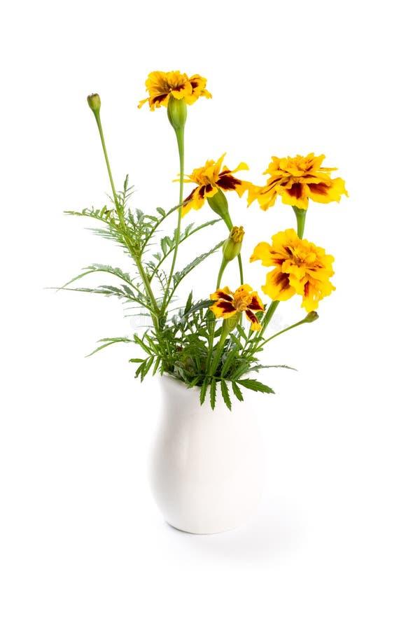 Download Marigold flowers in vase stock photo. Image of ceramics - 16911572