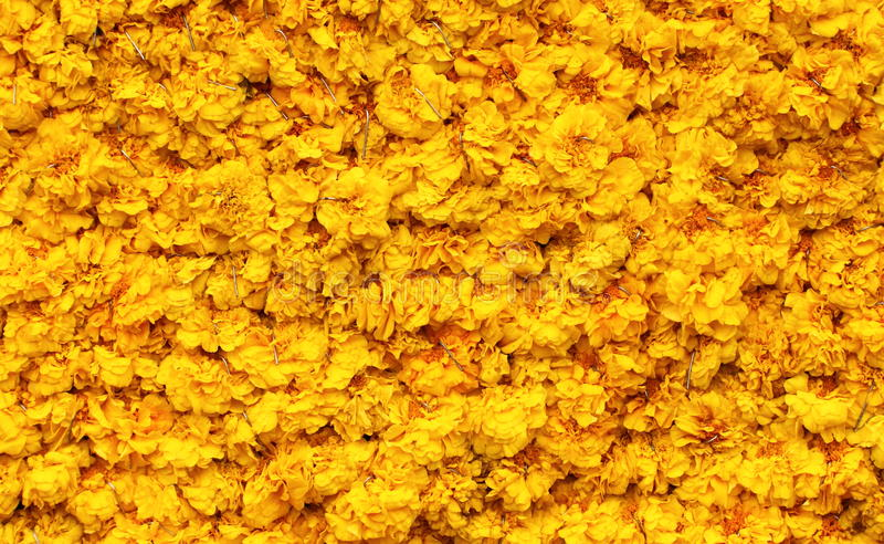 Marigold Petals background royalty free stock image